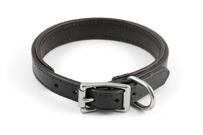 Collare imbottito per Bulldog Francese con fibbia in acciaio inox