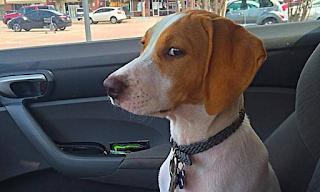 Η κρίσιμη στιγμή! Αυτοί οι σκύλοι συνειδητοποιούν ότι δεν πηγαίνουν βόλτα αλλά στον κτηνίατρο - ΕΙΚΟΝΕΣ