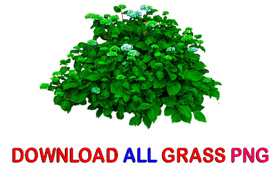 Grass Png Zip File, Grass Png, Photoshop Editing png, All Editing Stocks