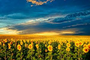 На всей территории Украины климат умеренно-континентальный
