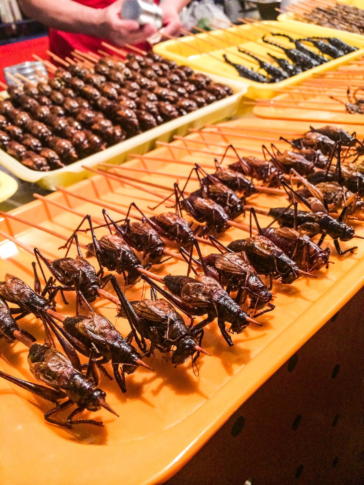 Fried grasshoppers at Donghuamen Food Market, Beijing