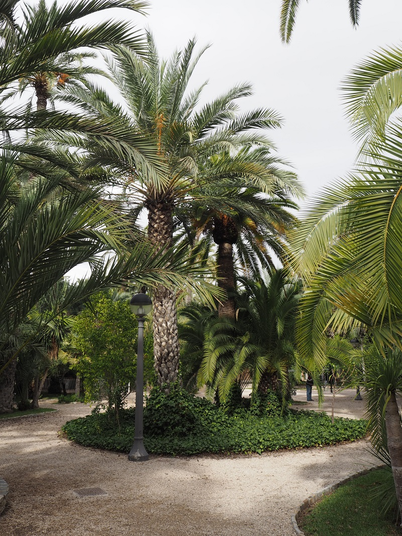 Palm trees at the parc Municipal, Elche