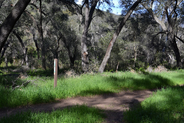 Wills Canyon