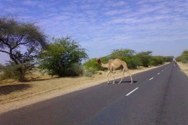 Jaisalmer Highway