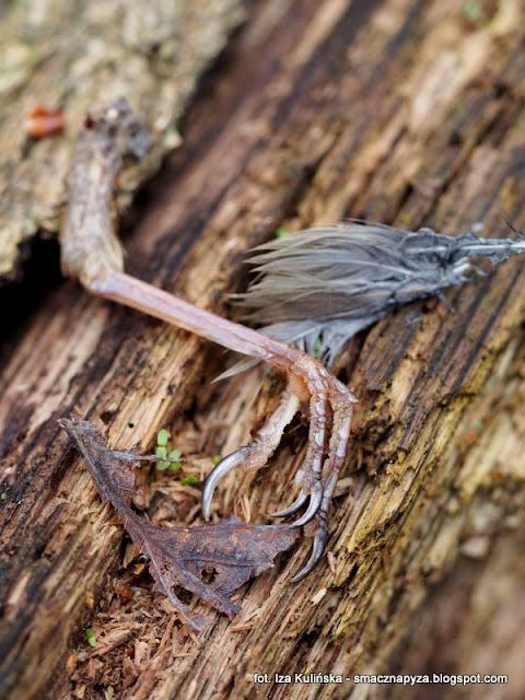resztki sikorki bogatki, co zostalo z ptaszka, sikorka bogatka, ptaszek, ptak, las bemowski, lancuch pokarmowy, cos ja zjadlo