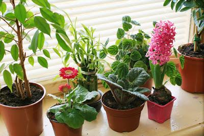 Manten tus plantas verdes y saludables