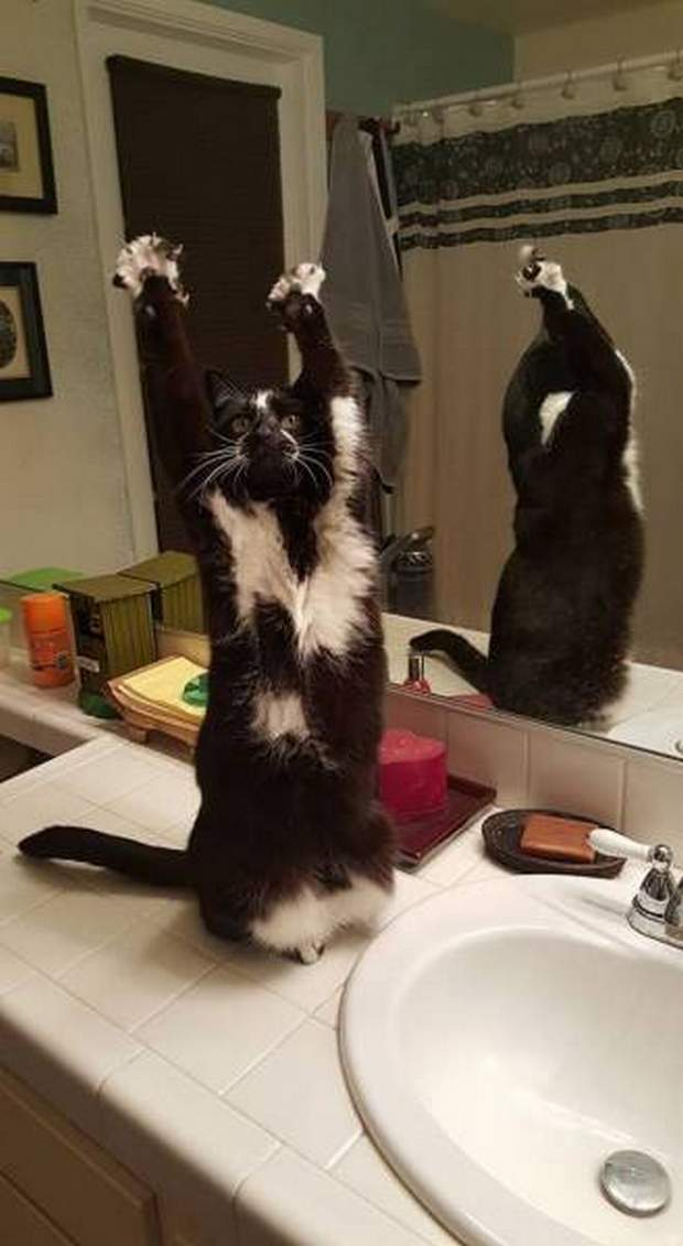 Funny cats - part 197, pictures of cats, adorable cat photos, best cat picture