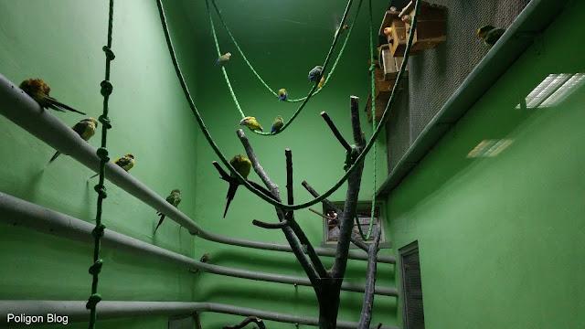egzotarium, fauna, flora, Sosnowiec, Zagłębie