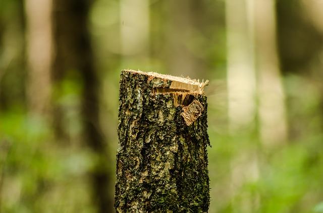 pohon kayu