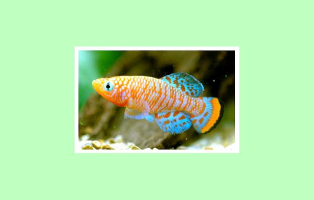 Pisces sebagai Vertebrata