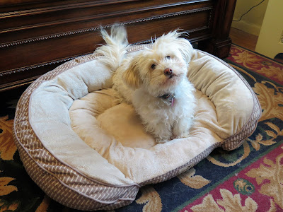 Wordless Wednesday Blog Hop and the eco-friendly dog bed I won!