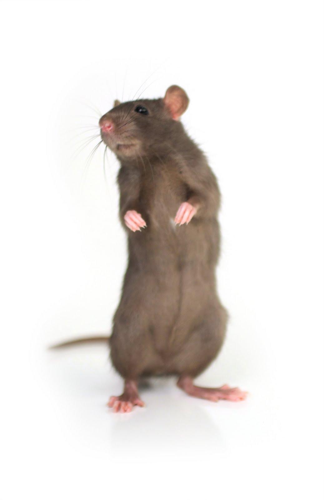 carmichael watson project blog no rats in taransay. Black Bedroom Furniture Sets. Home Design Ideas