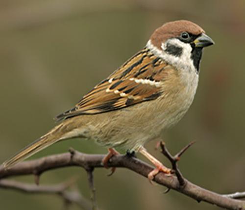 Unduh 100+ Gambar Burung 4d Paling Bagus Gratis