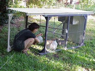 Como hacer un gallinero casero de traspatio f cil ganar for Como hacer un criadero de cachamas