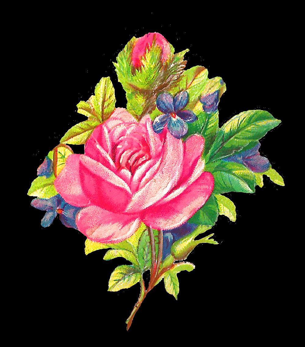 rose flowers digital design - photo #1