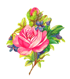 rose flower image digital botanical art