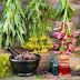Βότανα και οι θεραπευτικές τους ιδιότητες από το Α ως το Ω…
