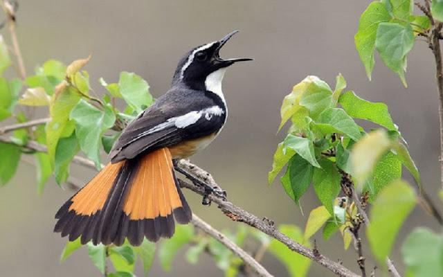 عصفور,تغريد,الحيوانات,اجمل اصوات الطيور,اصوات كناري,الطيور -,الطيور,اصوات الطبيعة,اصوات الطيور البرية,اجمل انواع طيور الحب,عصفير,وعصافير