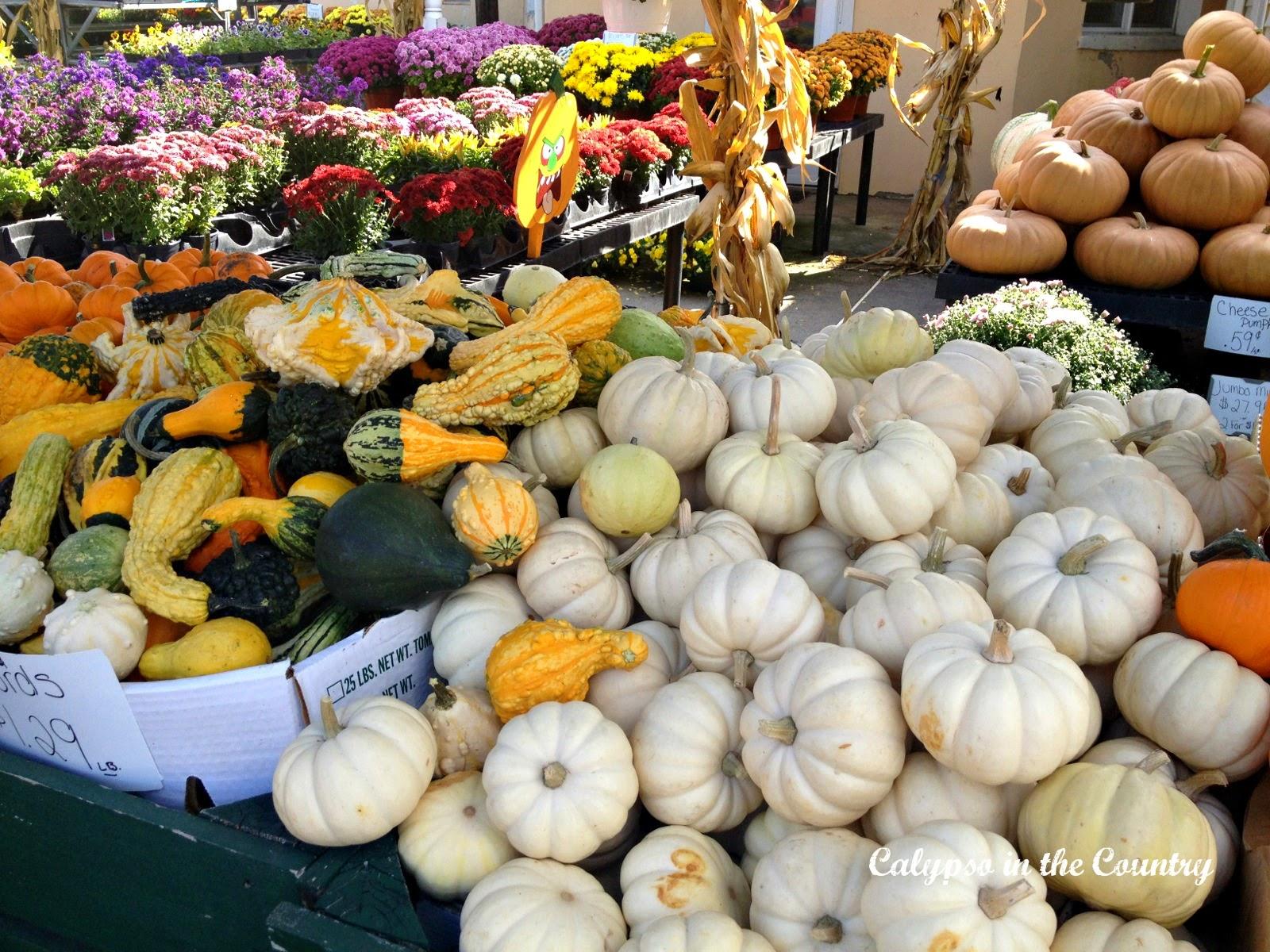 White pumpkins at a farm stand