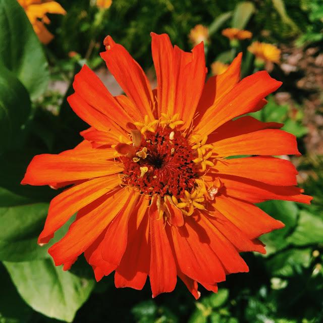 bok tower gardens, Lauren Banawa, lake wales, florida scenery, orange flower