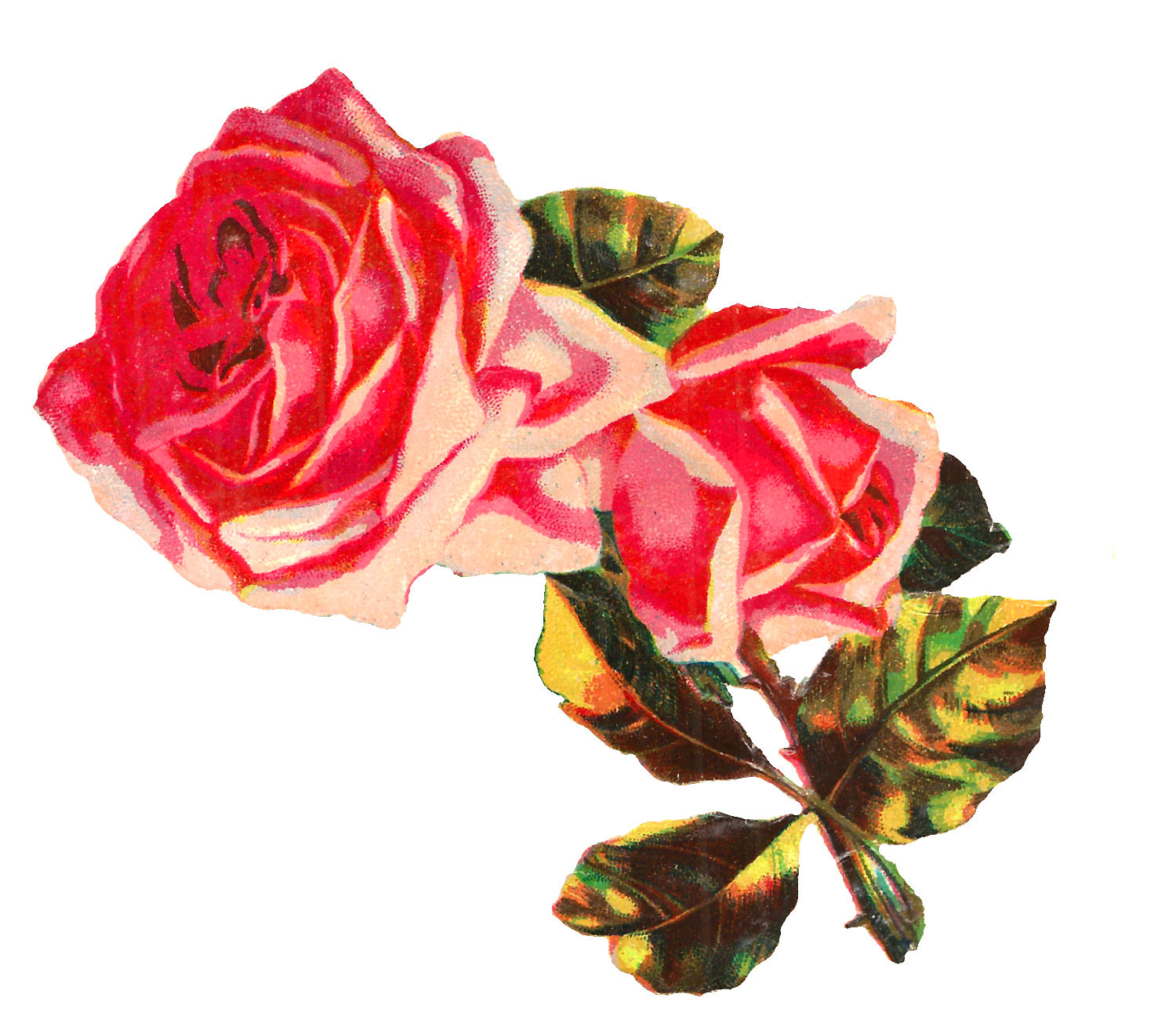 Antique Images: Free Shabby Chic Pink Rose Image Clip Art ...