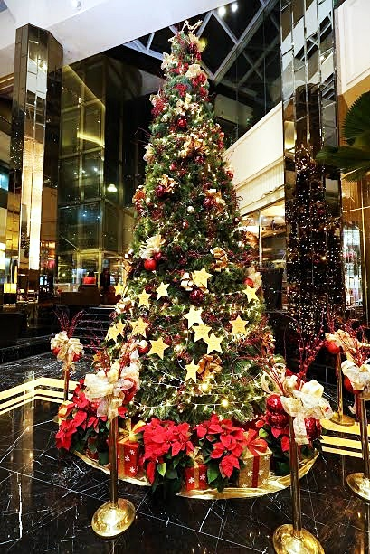 20 Feet Tall Christmas Tree Illuminated With 50 Golden Stars
