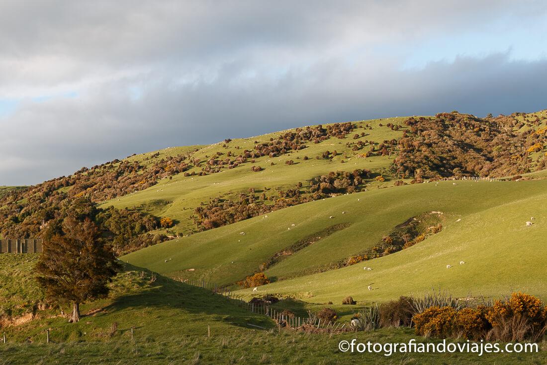 Southern scenic route en Nueva Zelanda