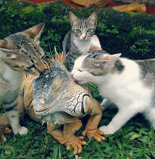 Kucing Kucing Ini Sangat Akrab Dengan Iguana