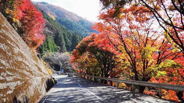 三峰口駅からスタートして三峯神社~中津峡と秩父の紅葉の名所を巡るサイクリングコース