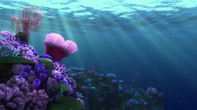 Kingdom of coral lies beneath Vinh Hy Bay 4
