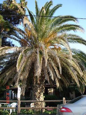 palmieri cat casa