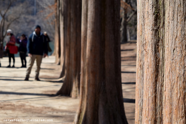 WINTER SONATA AT NAMI ISLAND