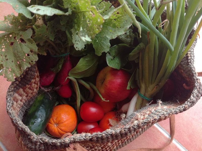 Frutta e Verdura da Maiorca