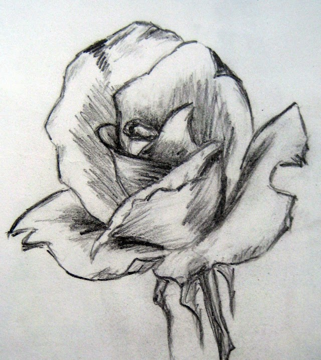 Sketch and Painting of a Rose