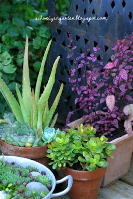 Zimmerpflanzen Für Sonnige Standorte zimmerpflanzen für sonnigen standort die schönsten einrichtungsideen