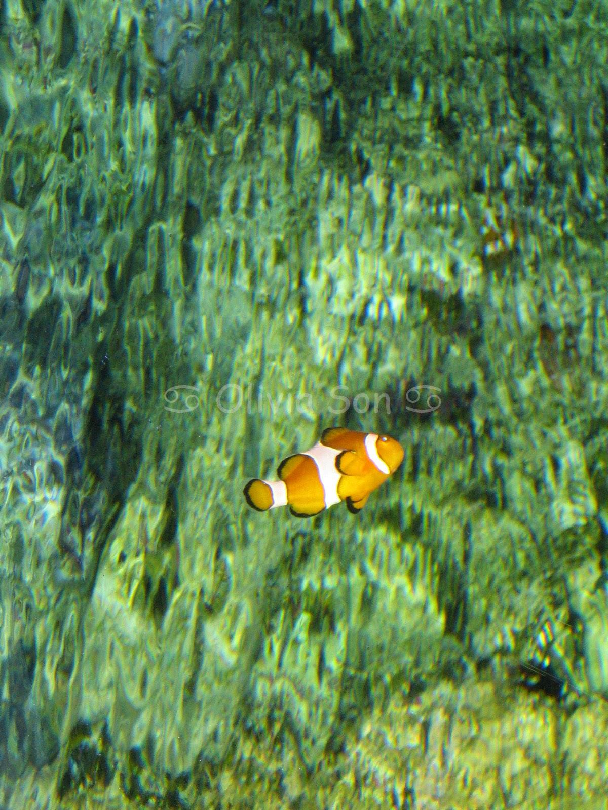 Nemo, Sydney Aquarium, Sydney, Australie