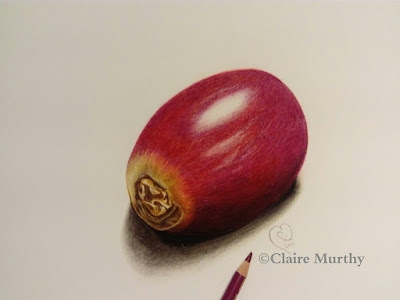 coloured pencil drawing of a grape