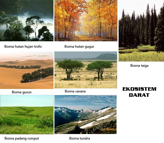 Contoh Ekosistem Air Buatan Contoh Tiga
