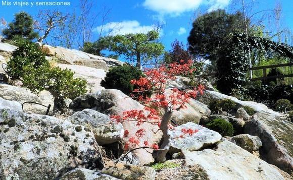 Montañas de bonsáis en el Bosque Encantado