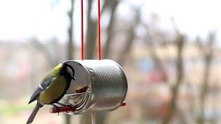 Tempat Makanan Burung Buatan Sendiri