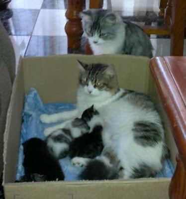 leche-materna-gatitos-buen-desarrollo