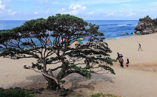 Pohon Duras Lambang Kemakmuran Kabupaten Gunung Kidul