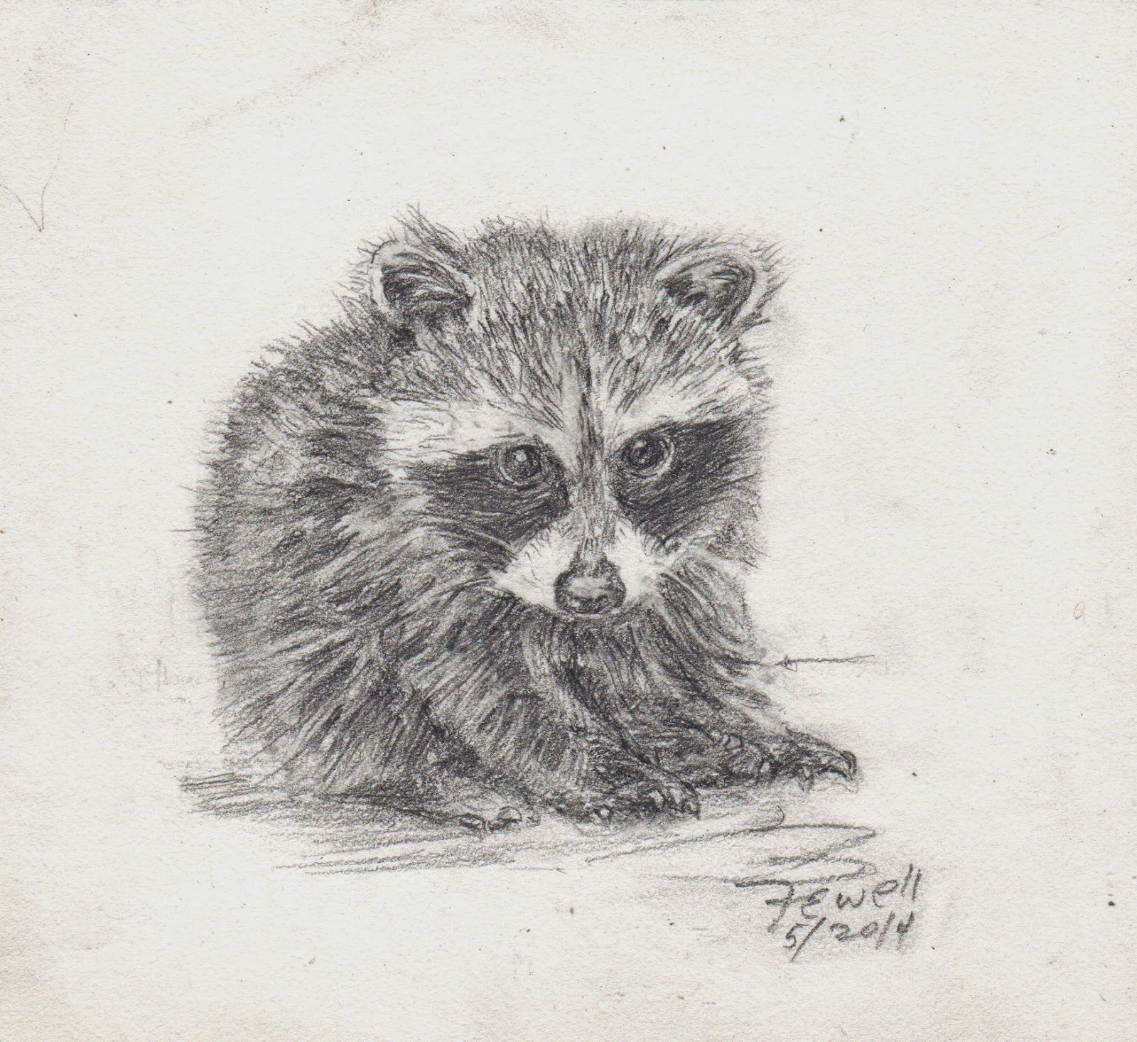 Baby Animal Drawings by Anne Fewell