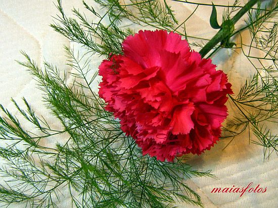 Red carnation flower with greenery