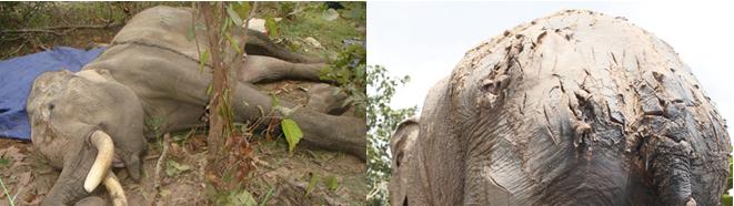 Die Elephant - Land of Love