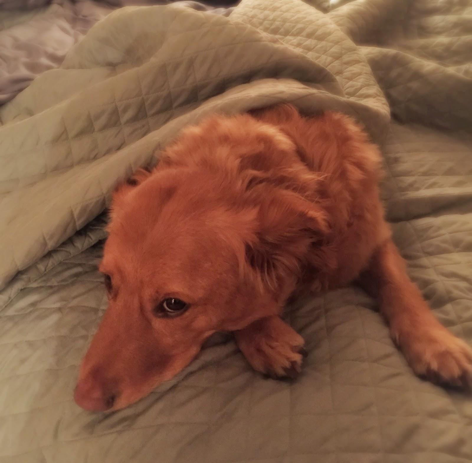 Sleepy Winchester