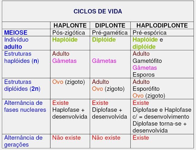 TIPOS DE CICLOS DE VIDA