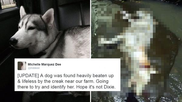 #JusticeForDixie: Missing dog found, beaten to death