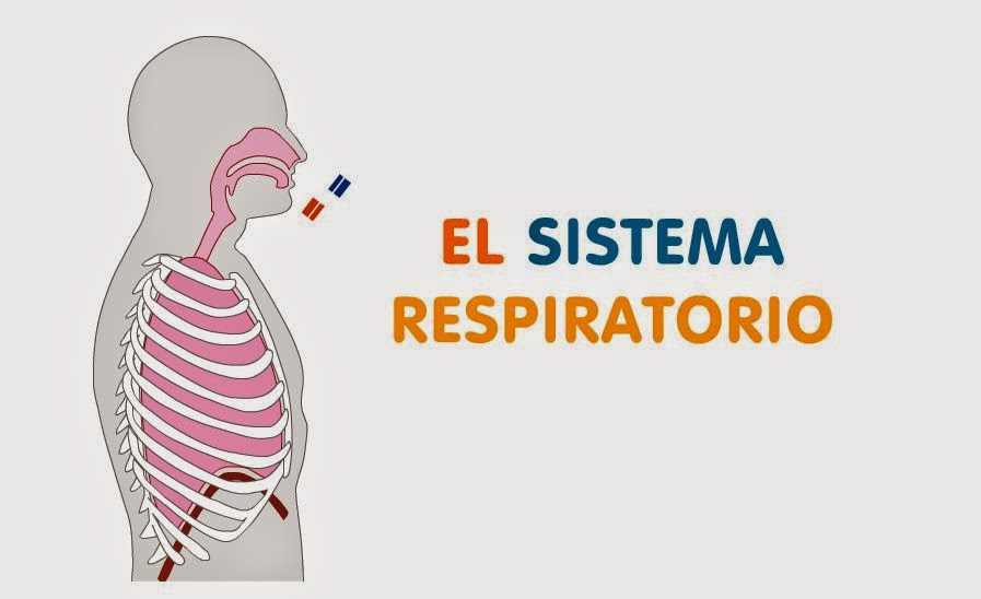 http://www.aula365.com/editorContenidos/Infografias/Contenido/INFO09_00.swf