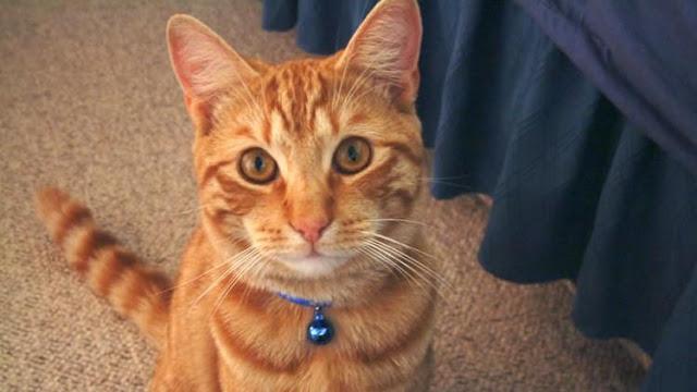 por que no debemos colocarle un cascabel a nuestros gatos..  El Libro Gordo de la Vida, consejos de gatos para gatos, salud, humor, actualidad, lupus, datos curiosos. EL LIBRO GORDO DE LA VIDA